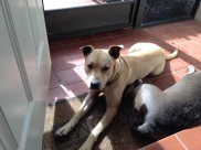 Enjoying a nice afternoon with her foster sister but needs a home of her own.