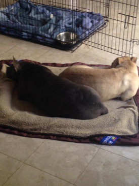 Snoozin' with her foster sister.