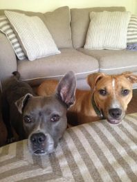 Posing with his foster sister, Willow